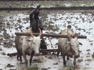 master nourad agriculture rural développement local nanterre paris