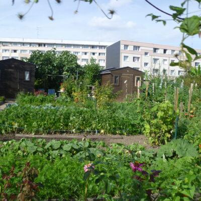 Impact sanitaire du jardinage