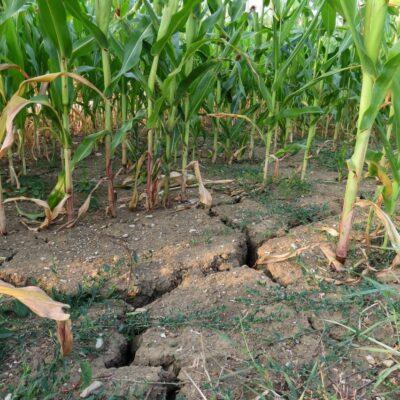 Adaptation des agriculteurs au changement climatique