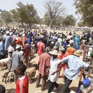 Gouvernance de 3 marchés à bétail au Bénin