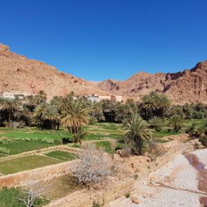 Résilience des systèmes ruraux en zone oasienne au Maroc